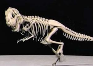 Скелет динозавра в движении