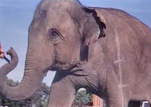Слон для аниматоров фильма парк юрскогопериода